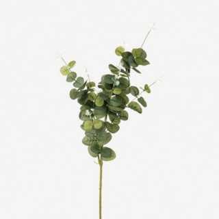 Vue de face du branchage eucalyptus